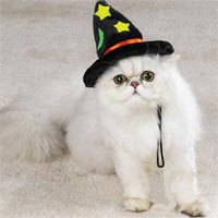 cat_witch