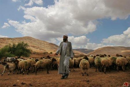 palestinian_shepherds